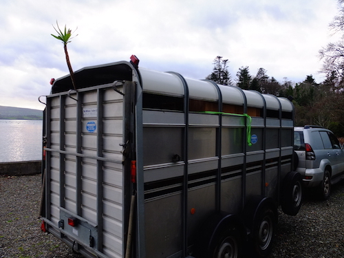 trailer_ardnagashel